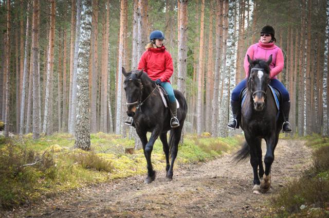 Zirgu izjādes ar jāšanas iemaņām.